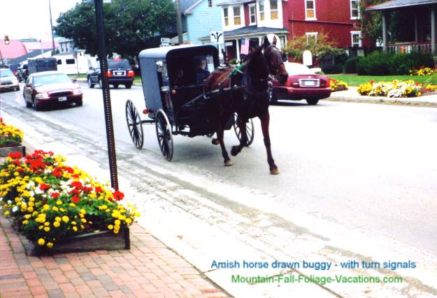 Amish Buggy - Horse Drawn with turn signals